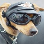 Road Gear for dogs