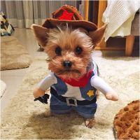 Cowboy/Sheriff Pet Costume