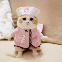 Nurse Pet Costume