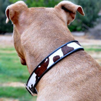 Cheyenne Leather Collar in Oreo