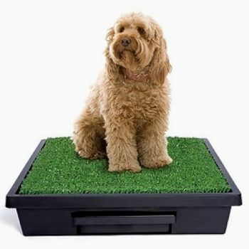 The large Pet Loo accomodates even large dogs
