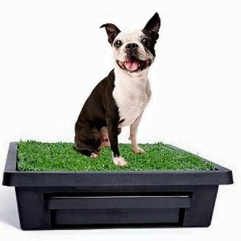 The small Pet Loo is perfect for small dogs or cats